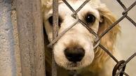 لایحه حمایت از حیوانات به مجلس میرود