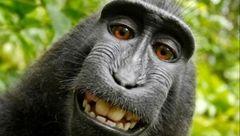 سلفی بازترین میمون دنیا+عکس