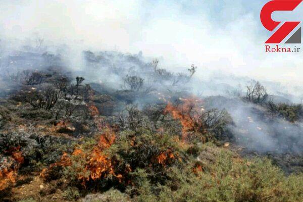 ۱۰۰هکتار از جنگل های پلدختر در آتش سوخت/ اطفای حریق بالگرد میخواهد
