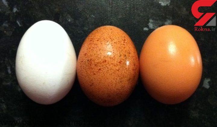 قیمت خرید تخم مرغ بسته بندی در بازار