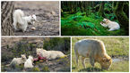 حیواناتی که رنگ پریده هستند+عکس