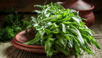 ویروسها و باکتریها را با یک سبزی معطر فراری دهید