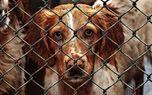 هیچ شهرداری حق اتلاف سگ های سرگردان را ندارد + فیلم