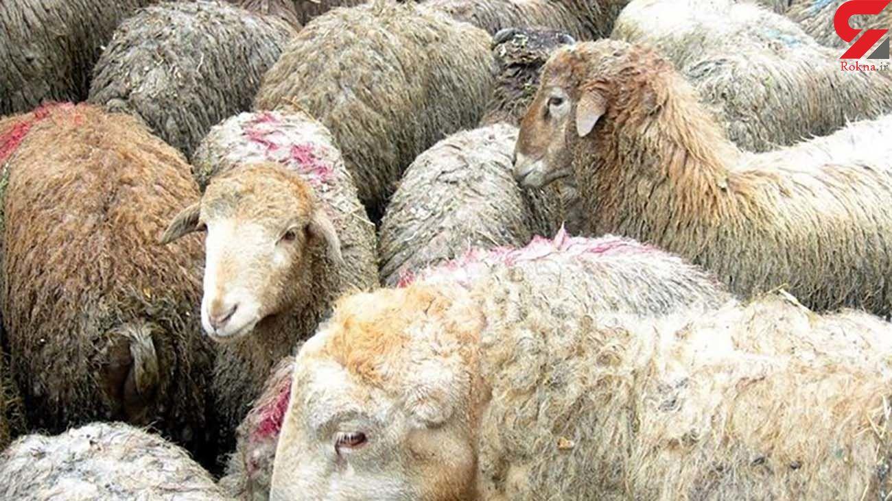 توصیه وزارت بهداشت در مورد عید قربان و ذبح دام ها