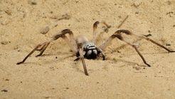 لحظه حمله یک عنکبوت به شکار خود +فیلم