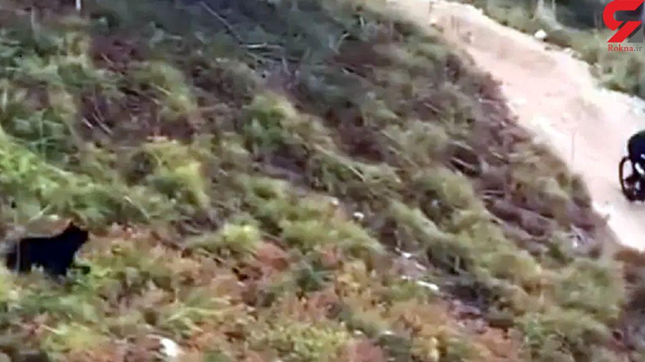 فیلم فرار یک دوچرخه سوار از حمله خرس سیاه