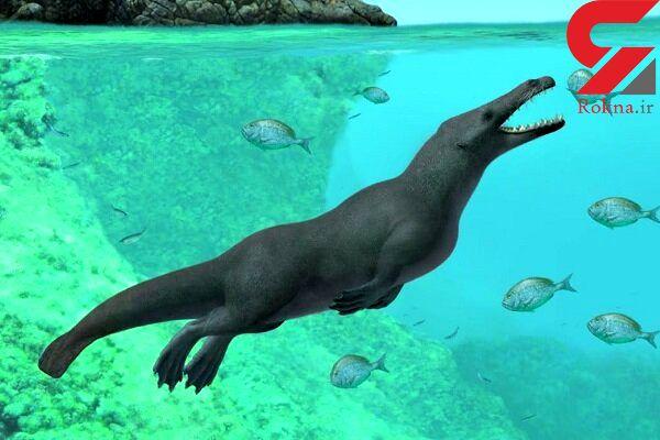 کشف فسیل وال ماقبل تاریخ دانشمندان را شگفت زده کرد