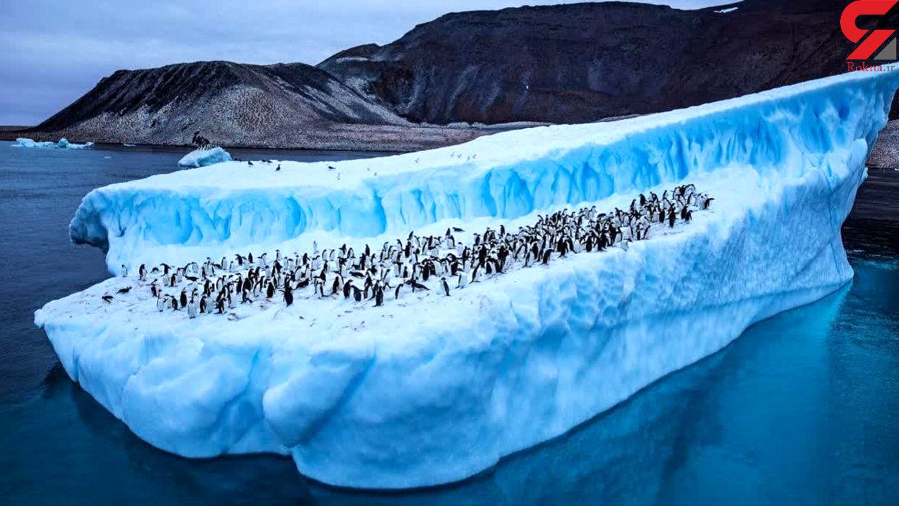 در قطب جنوب چه می گذرد؟ / رد پای موجوداتی که منقرض شده اند!