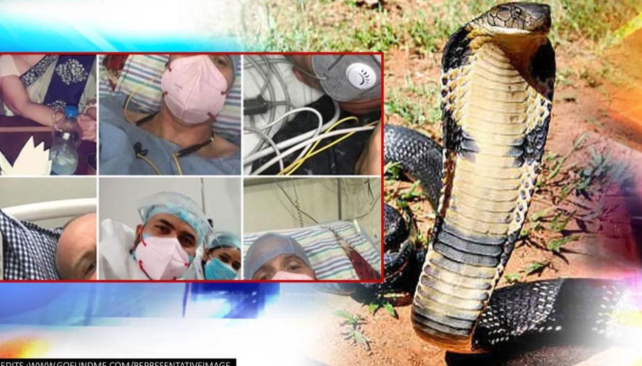 British man who survived Covid-19, dengue, malaria, gets bit by cobra in Jodhpur
