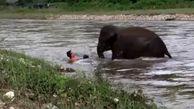 اقدام فداکارانه بچه فیل برای نجات یک مرد+عکس