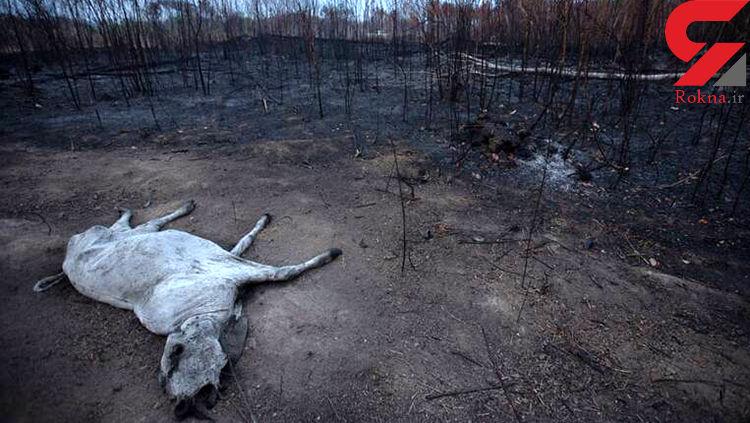 تصویری دلخراش از آتش سوزی اخیر در آمازون