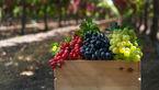 کاهش خستگی روزانه با این میوه بهشتی