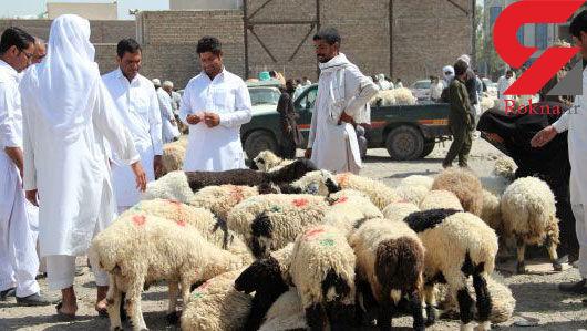 باند قاچاق گوسفند در مرز مهران منهدم شد