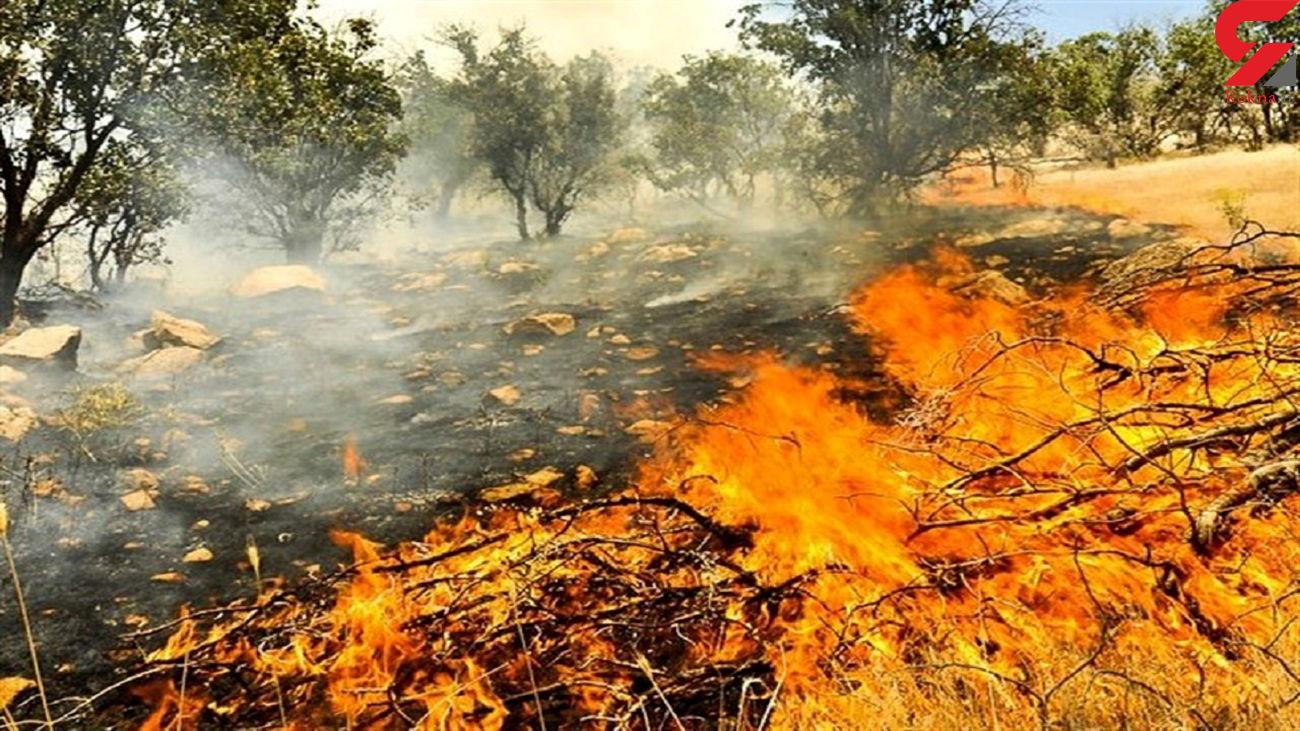 آتش شبانه درختان آهنشهر بافق را سوزاند