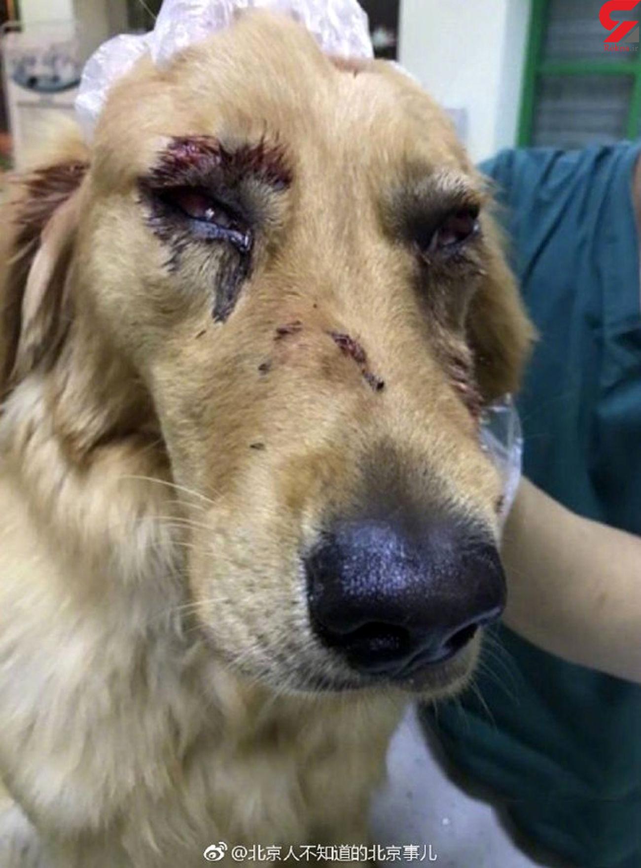 فیلم سگ کشی پسر جوان / او را می شناسید؟! + عکس و فیلم