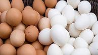 تخممرغ گران شد + جزییات