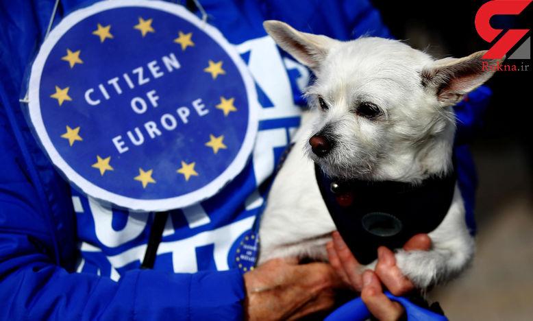 راهپیمایی صدها سگ در اعتراض سیاسی به انگلیس ! + تصاویر