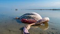 70درصد تالاب های کشور از دست رفت/ تجاوز گسترده به زیستگاه های پرندگان