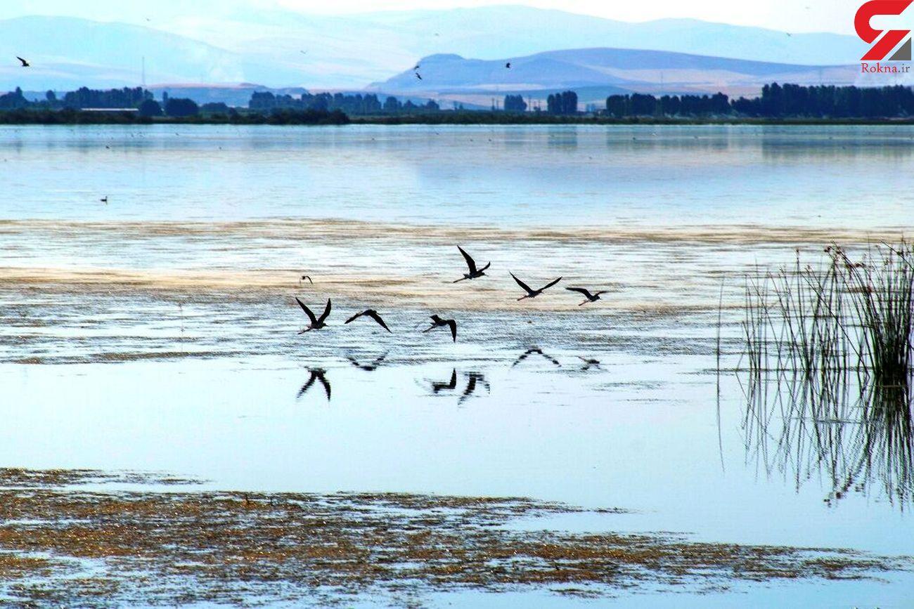 تایید بیماری آنفلوانزای فوق حاد پرندگان در تالاب سد میل مغان