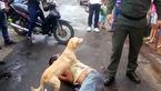 نگهبانی سگ وفادار از صاحب بی فکرش در خیابان / ببینید