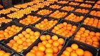 تامین پرتقال شب عید/ سرما تنها 30 درصد از تولید باغات را خراب کرد