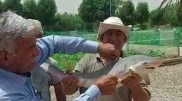 ورود کوسه ها به آب های خوزستان / آبادانی ها ترسیدند + فیلم