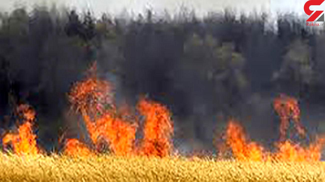 بی احتیاطی راننده کمباین 80 هکتار از مزارع کرمانشاه را بر باد داد