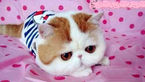 این گربه در اینستاگرام  ۲۹۴۰۰۰ فالوور دارد!+عکس
