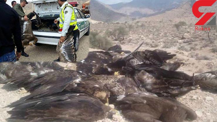 نتایج آزمایش مرغهای آلوده در فارس هنوز مشخص نشده است