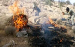 فیلم فرار گله گرازها از آتش سوزی جنگل در کهگیلویه و بویر احمد / حیوانات وحشت زده اند