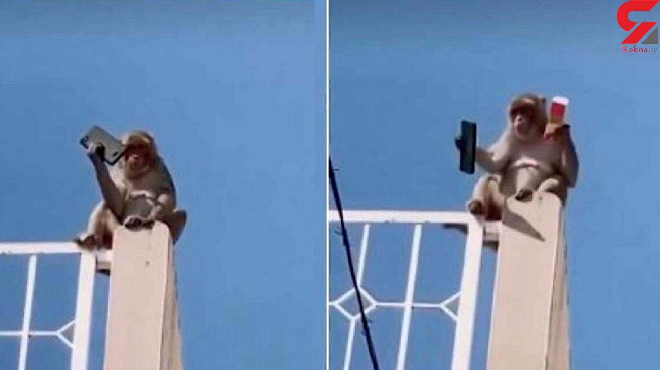 شرط یک میمون برای پس دادن موبایل ! + فیلم