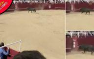 فیلم لحظه مرگ یک گاوباز توسط گاو خشمگین