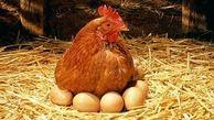 قیمت جدید مرغ و تخم مرغ در بازار اعلام شد + قیمت