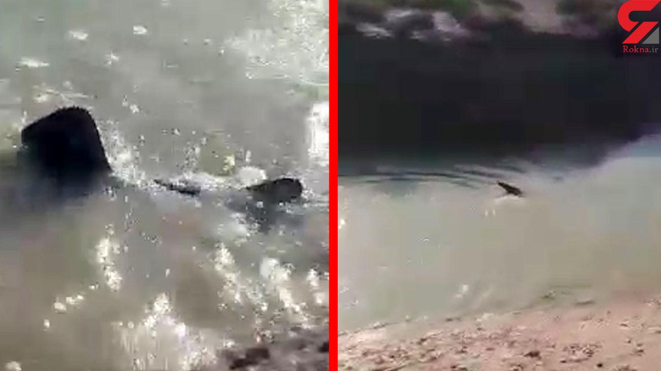 فیلم پیدا شدن یک کوسه بزرگ در رودخانه کرخه / مردم حیرت زده شدند + عکس