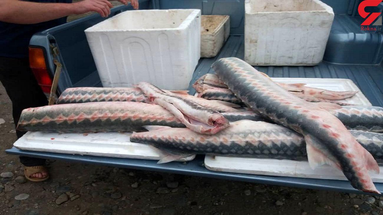 کشف انواع ماهی های در خطر انقراض در بازار لنگرود