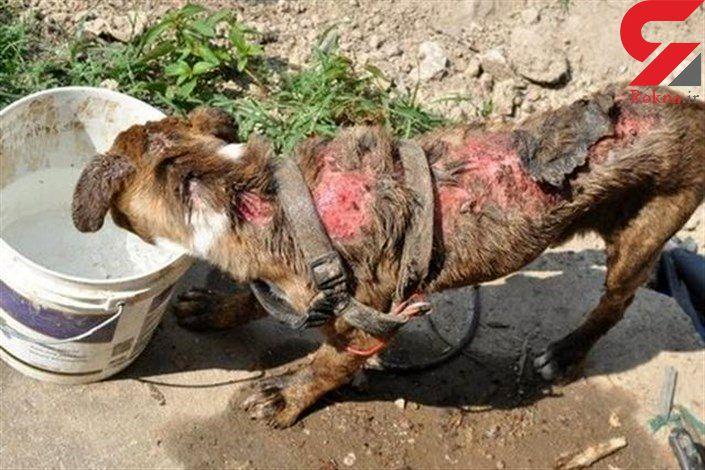 این موتور سوار را می شناسید؟! / او در آذربایجان غربی سگی را شکنجه داد! + فیلم