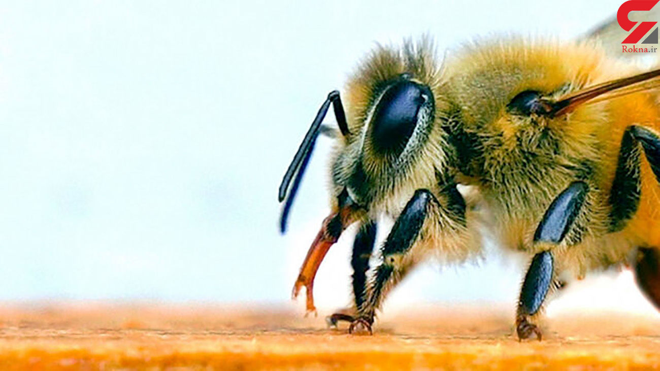 ماموریت کرونایی زنبورها