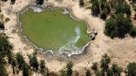 علت مرگ ۳۳۰ فیل در بوتسوانا چه بود؟!  + عکس