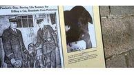 سگی که به حبس ابد محکوم شد+عکس