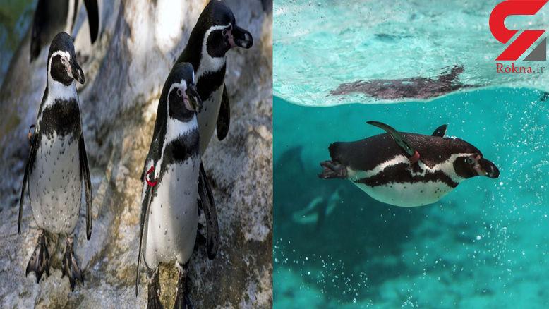 مرگ تلخ 7 حیوان در باغ وحش + عکس