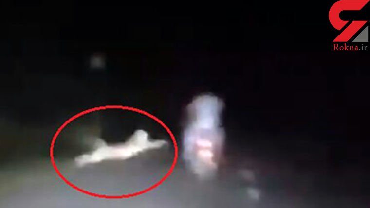 لحظه حمله ترسناک پلنگ به یک موتورسوار + فیلم / هند