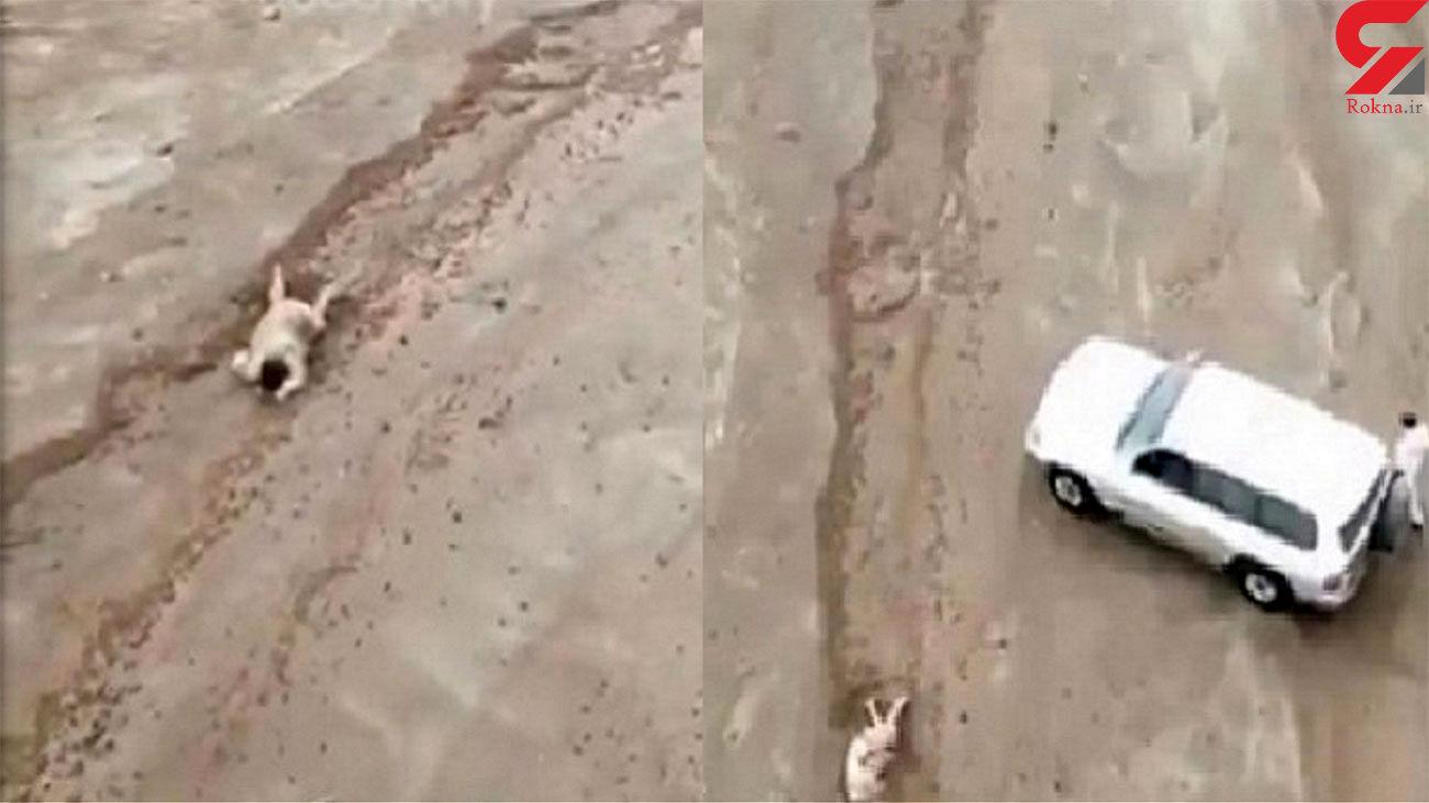 نجات معجزه آسای مرد غرق شده در سیلاب + فیلم و عکس