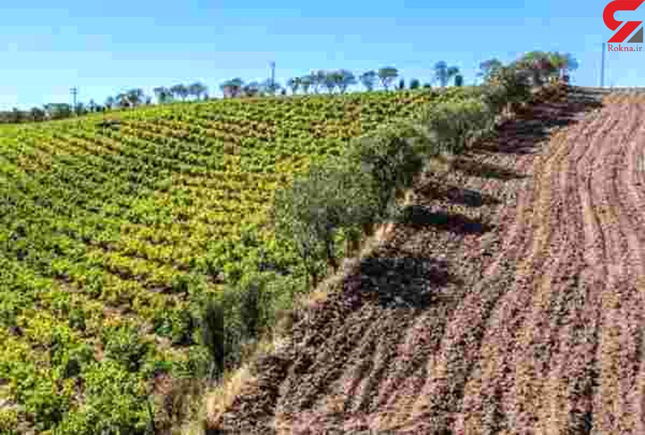 رفع تصرف ۶۷ هزار هکتار زمین کشاورزی لرستان