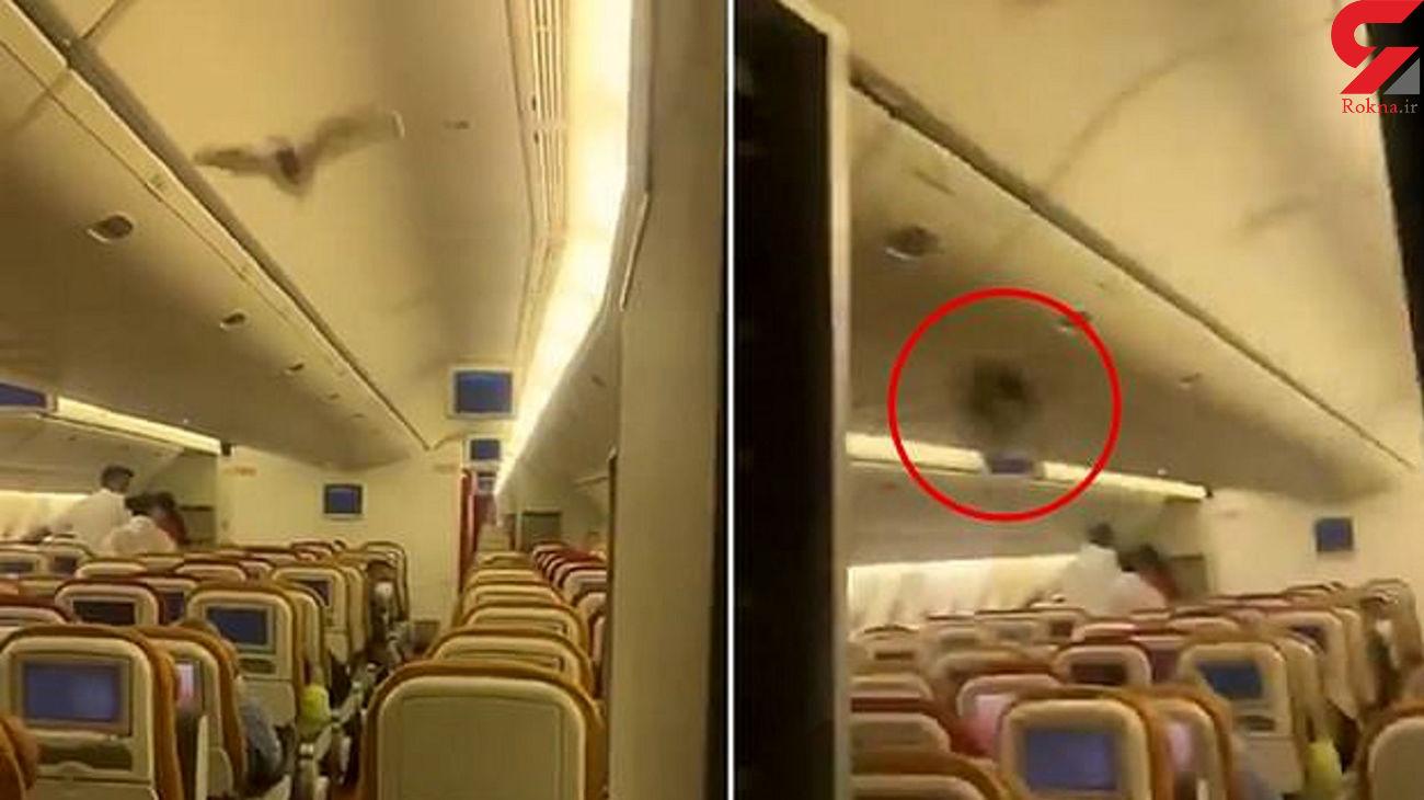فرود اضطراری هواپیما بخاطر پرواز خفاش در کابین مسافران+ فیلم