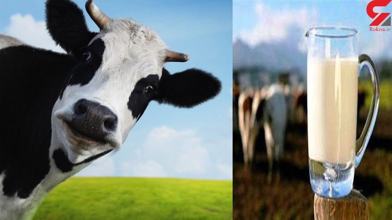 تولید شیر در کشت و صنعت مغان به ۳۳ هزار تن افزایش یافت