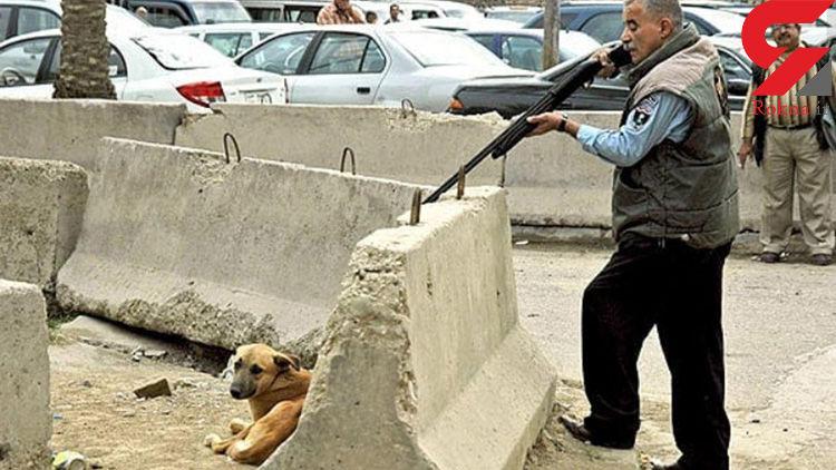 عکس دلخراش از پشت پرده سگ کشی با آمپول اسید در آرادکوه جاده قم