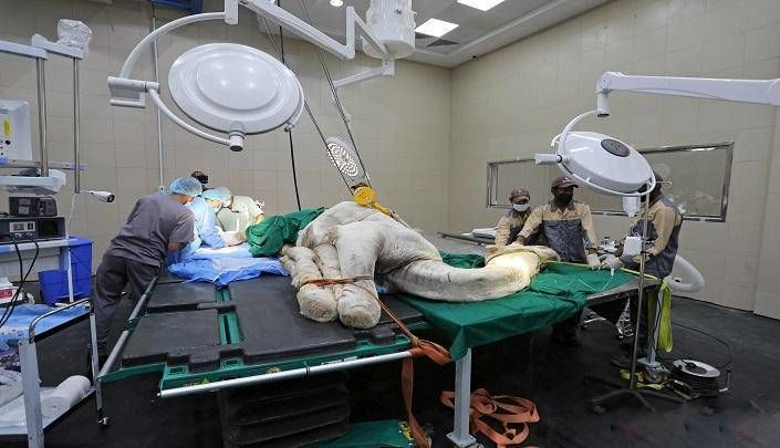 اخبارگوناگون,خبرهای گوناگون ,بیمارستان فوقپیشرفته شترها