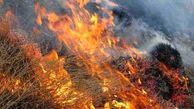 عامل آتشسوزی مراتع زاگرس مشخص شد