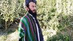 مدیر اجرایی شهر چهارسده  ترور شد + عکس