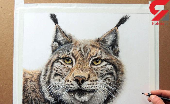 نقاشی های شگفت انگیز با مداد از حیوانات + تصاویر